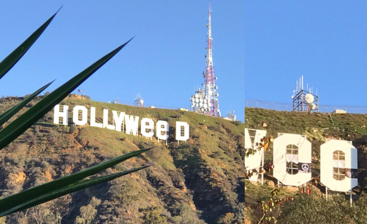 hollywood sign hollyweed
